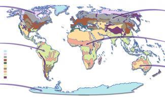 Ilustración mapa biomas