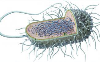 Ilustración bacteria
