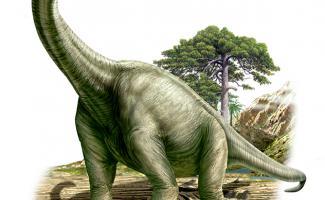 Ilustracion Braquiosaurio