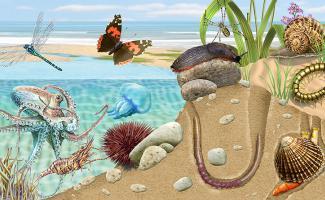 Ilustración ecosistema playa