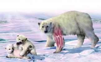Ilustración oso poiar