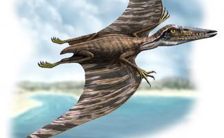 Ilustración pterodactylus