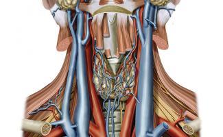 Ilustración vascular