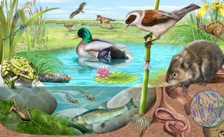 Ilustración elementos de un ecosistema