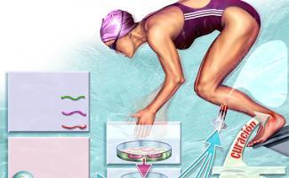 Ilustración nadadora